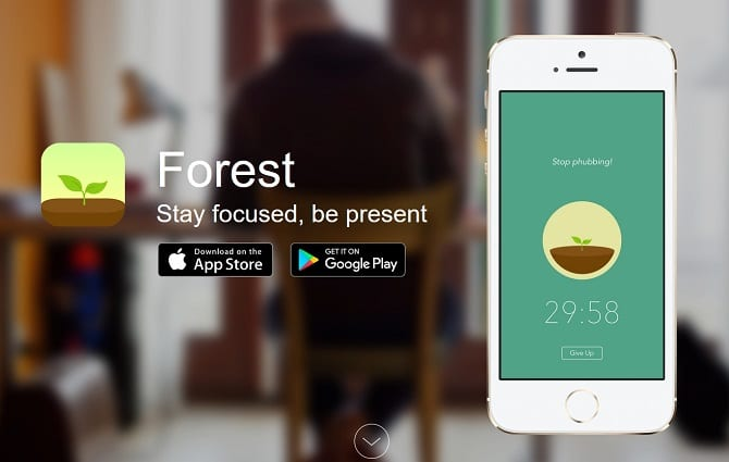 Forest_Website_Screenshot